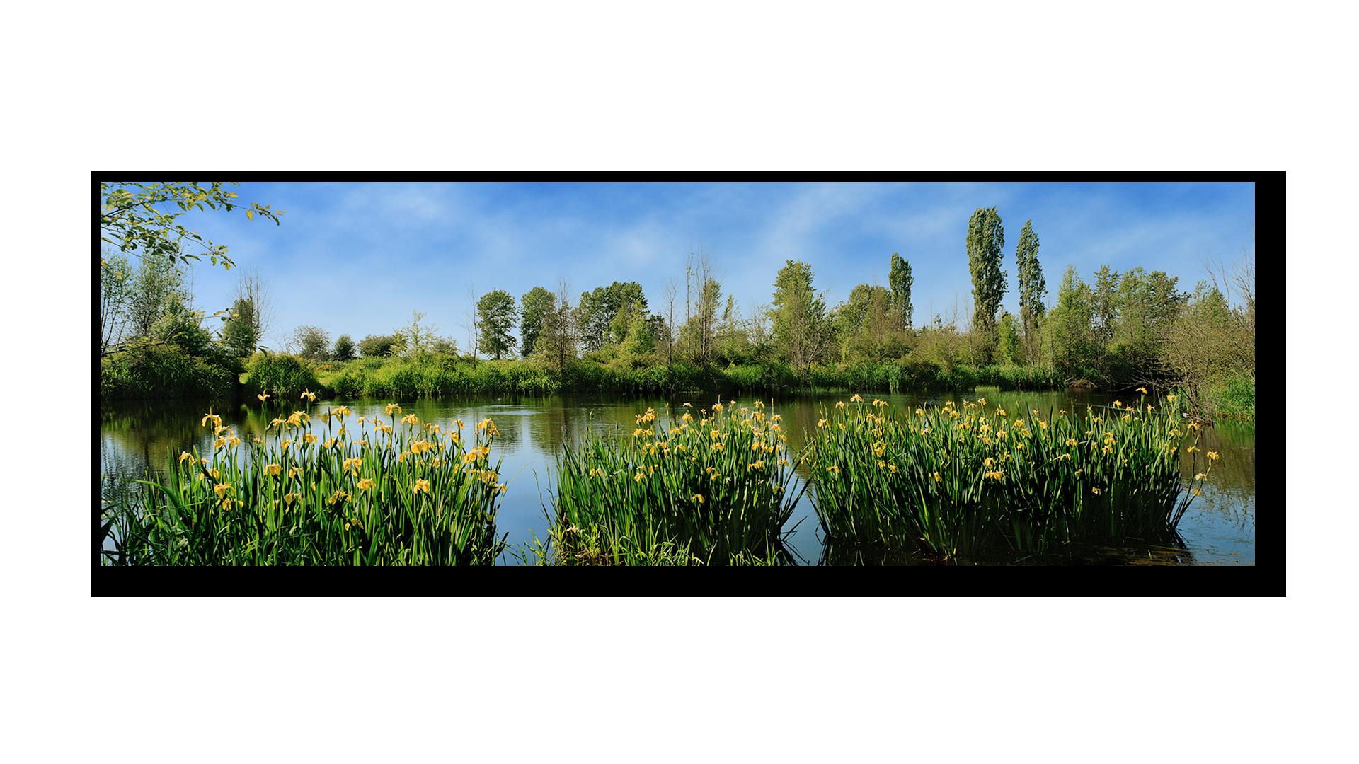 Elgin Park